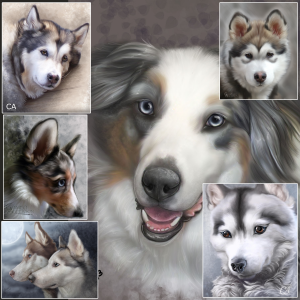 All species including husky, Australian shepherd, malamute, and shelties.