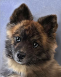 Fluffy small dog portrait painting